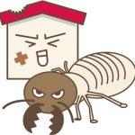 白蟻予防できてますか?種類と発生時期で被害に遭わないチェックポイント
