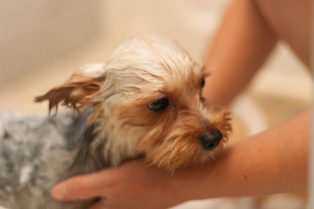 愛犬シャワー