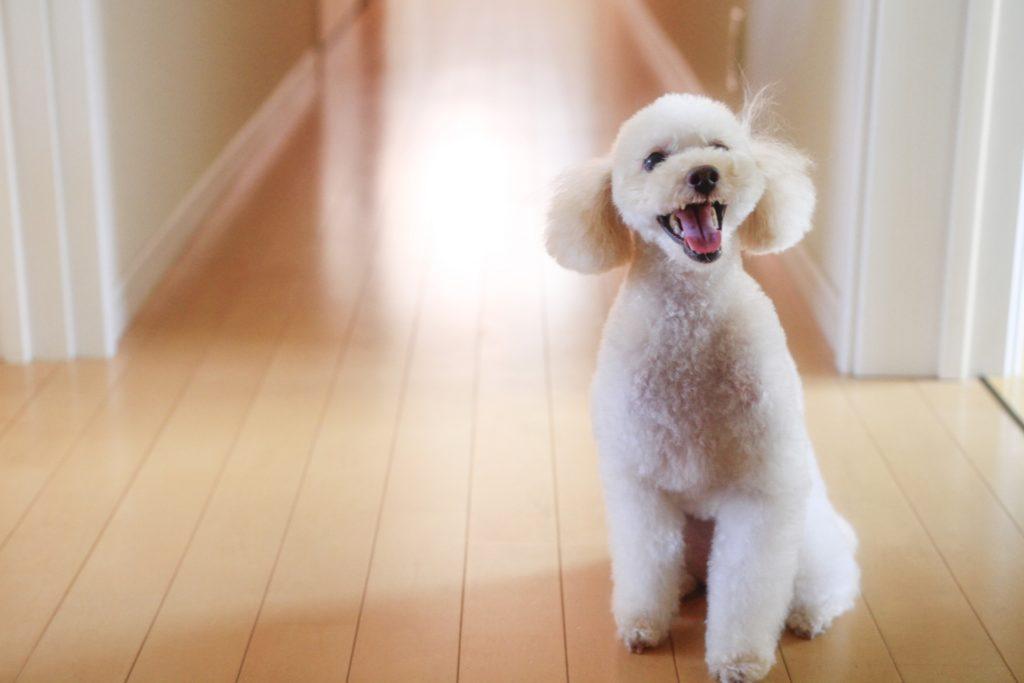 犬と暮らす家 リフォーム