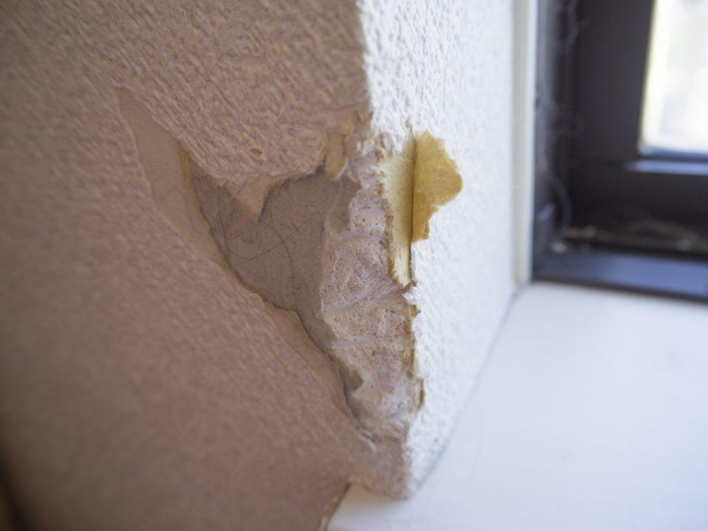 愛犬 壁改善