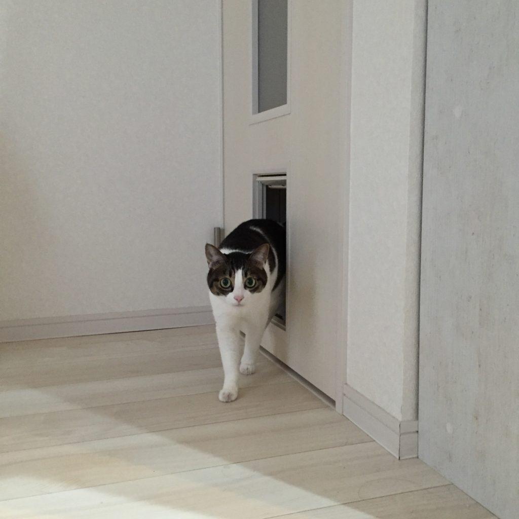 猫 潜り戸