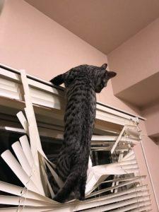 猫 ブラインド