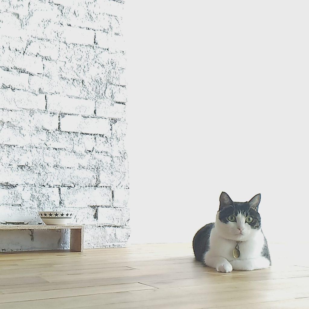 猫と暮らす家 リフォーム