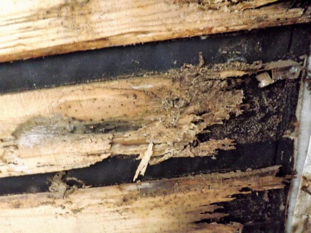 シロアリ 食痕 蟻道