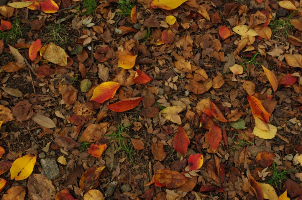枯葉を防ぐ